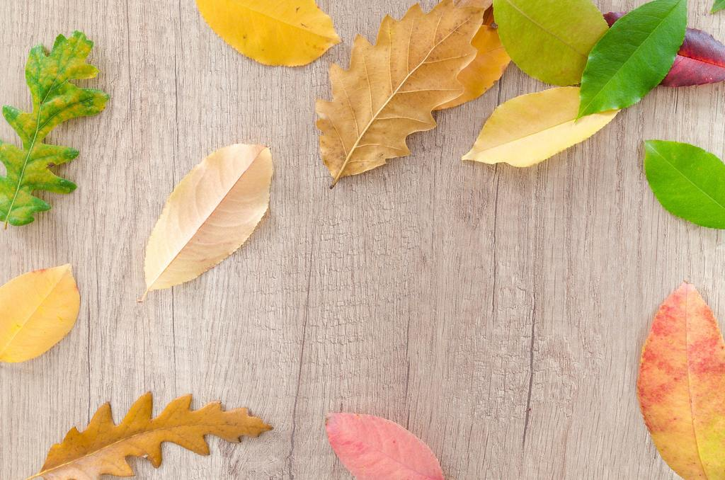 leaves on a brown board